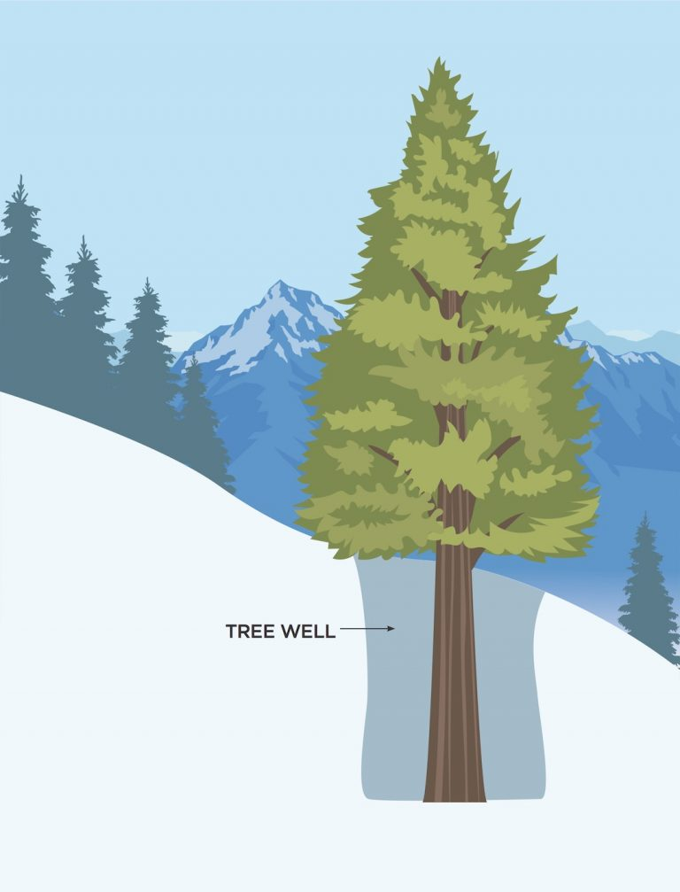 How To Minimize the Danger of Tree Wells