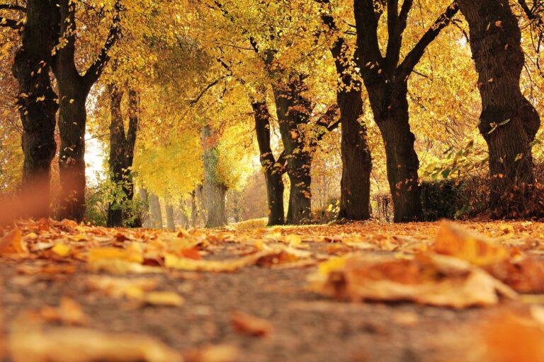 Autumn Tai Chimovements